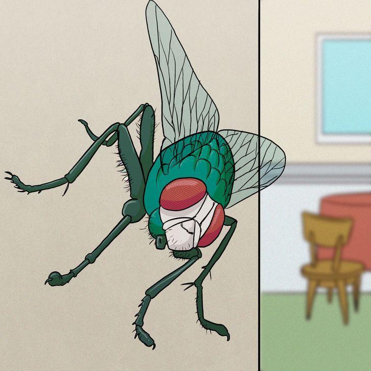οι_μύγες_μπορούν_να_περπατήσουν_ανάποδα_
