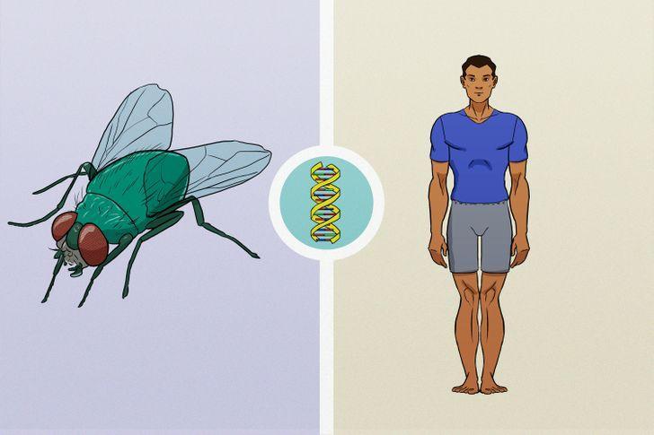 οι_μύγες_και_οι_άνθρωποι_έχουν_κοινό_DNA_