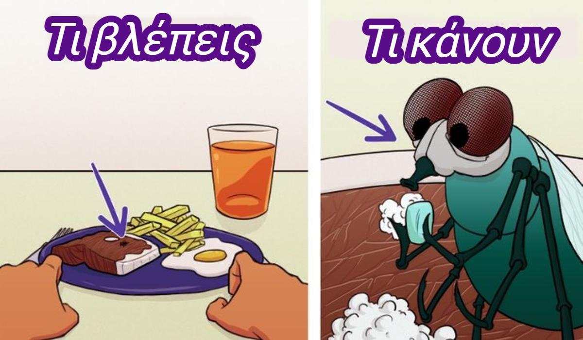 Μύγες: Γιατί τρίβουν τα χέρια τους και ποσα είδη υπάρχουν _