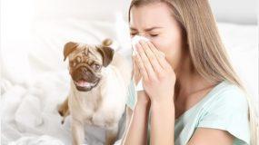 Είμαι αλλεργική στα σκυλιά και η πεθερά μου πήρε στην κόρη μου κουτάβι_