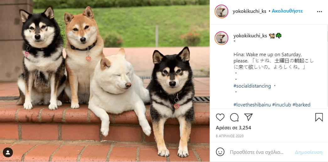 σκύλος_χαλάει_όλες_τις_εικόνες_με_τις_αστείες γκριμάτσες_του_