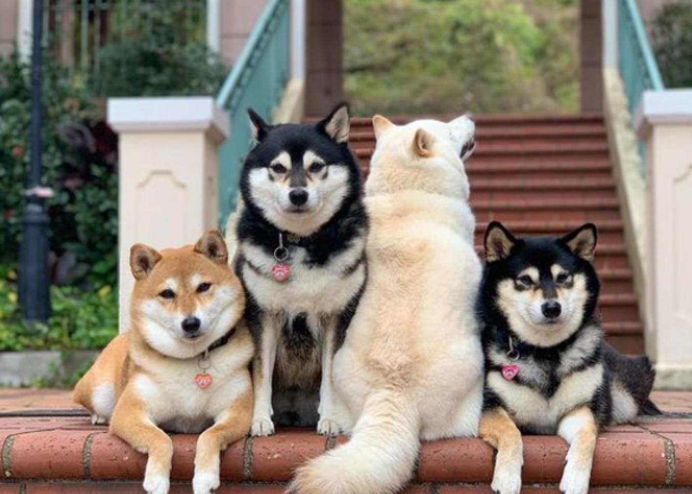 Ξεκαρδιστικό: Σκύλος χαλάει όλες τις ομαδικές φωτογραφίες