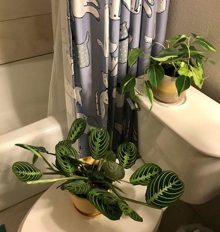 πράγματα_που_δεν_πρέπει_να_έχουμε_στο_μπάνιο_