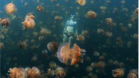Viral video: Γυναίκα κολυμπά ανάμεσα σε εκατομμύρια μέδουσες
