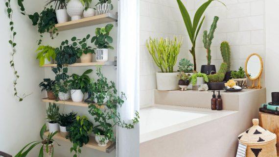 φυτά_εσωτερικού_χώρου_στο_μπάνιο_διακόσμηση_ιδέες_