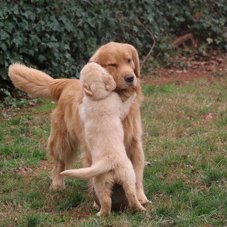 αστείες εικόνες_με_σκυλιά_