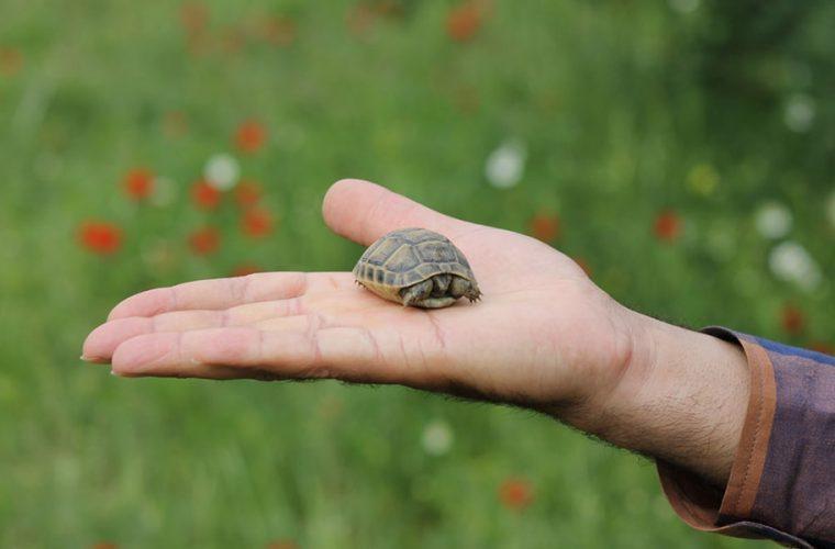 Κύπρος: Νεόνυμφοι μοίραζαν ως μπομπονιέρες ζωντανά χελωνάκια!