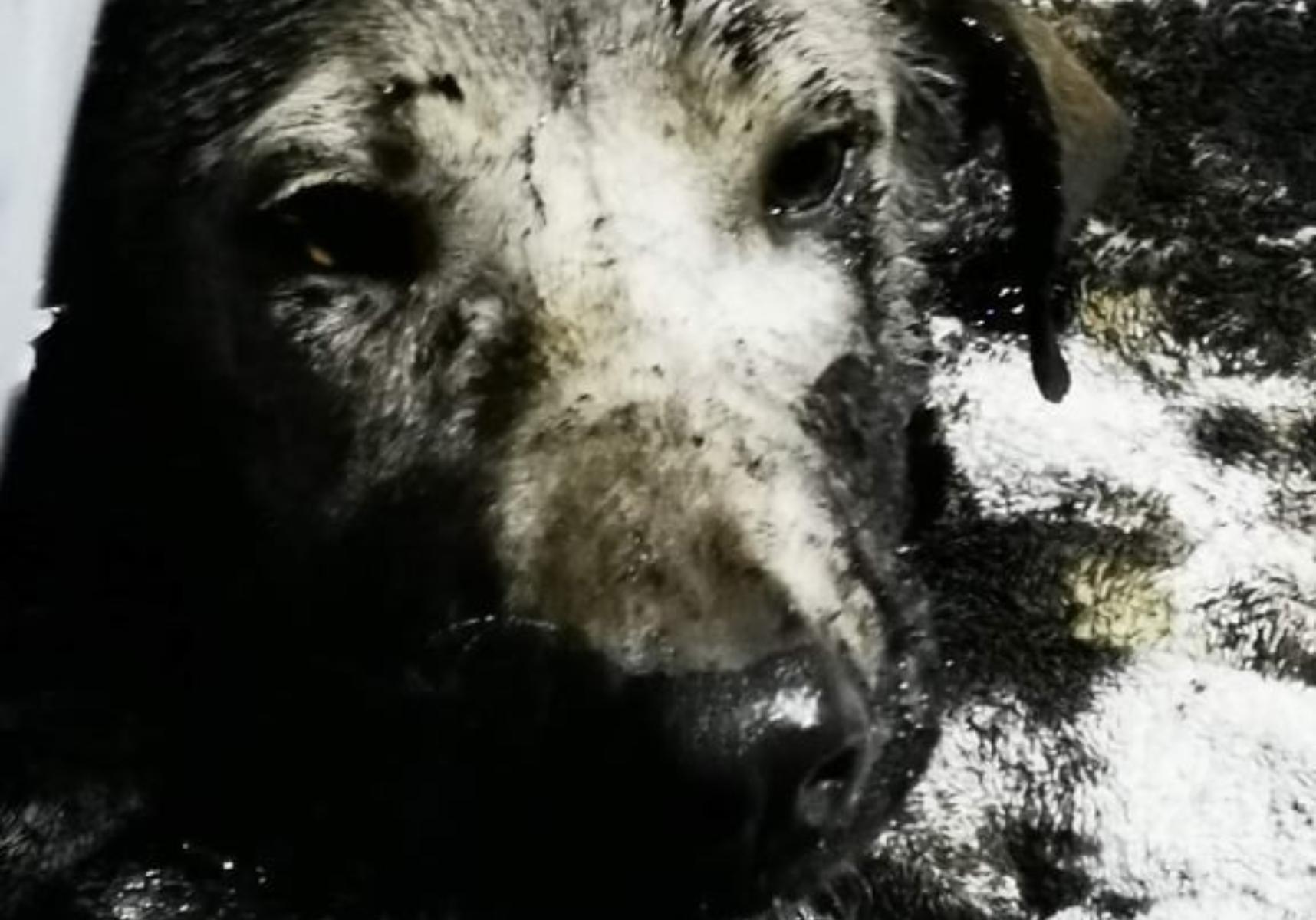 Φρίκη :  Έριξαν πίσσα σε σκυλάκια και τα πέταξαν ζωντανά στα σκουπίδια