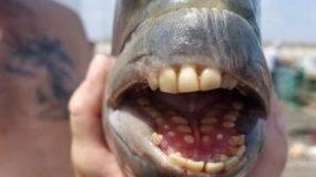 Έπιασε ψάρι με ανθρώπινα δόντια! (εικόνες)