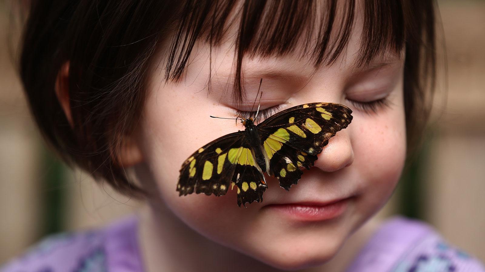 Φαινόμενο της πεταλούδας ή butterfly effect: Αληθινές Ιστορίες
